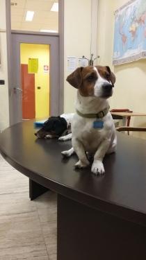 Formazione PetTherapy Torino