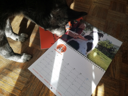 Calendario CONteSTO 2019